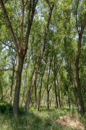 Riverside forest Kotza Orman or Large Forest