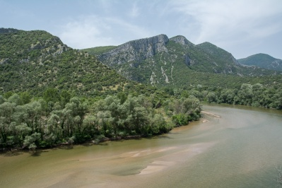 Aesthetic Forest of Strait of Nestos River